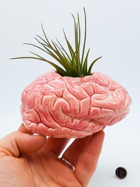 Pink Brain Planter