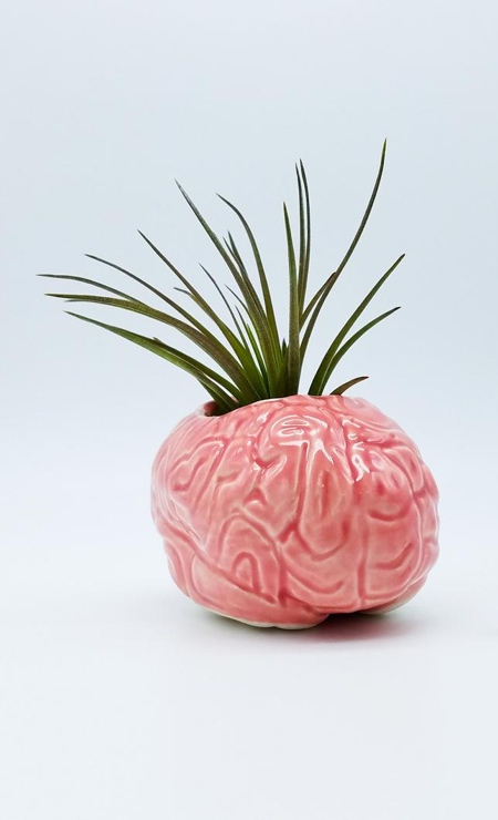 Human Brain Vase