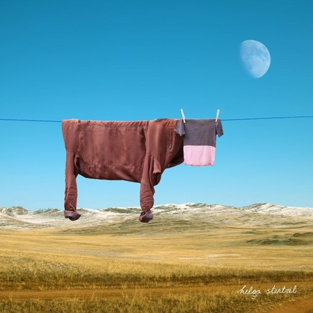 Clothes Bull