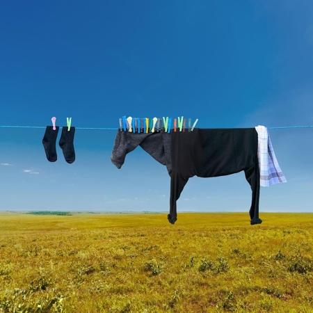 Clothing Horse