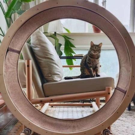 Cat Workout Wheel Chair