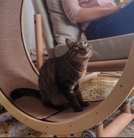 Cat Fitness Chair