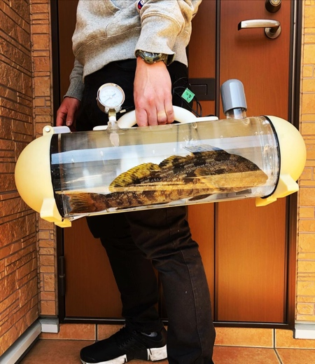 Fish Carrier