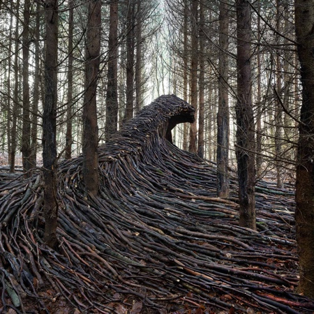 Tree Waves in a Forest