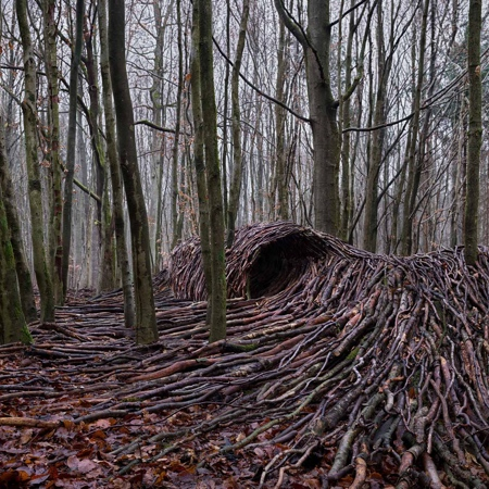 Wave Made of Trees