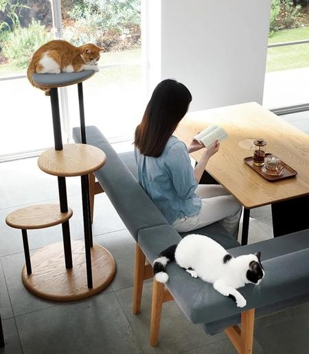 میز چوبی طراحی شده برای افراد و گربه های آنها